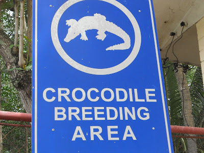 crocodile breeding area